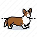 corgi, pet, dogs, dog, puppy
