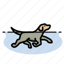 dog swimming, dogs, labrador retriever icon