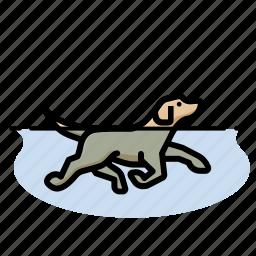 dog, dog swimming, dogs, labrador retriever, pet, yellow lab icon