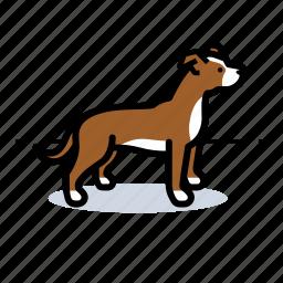dog, doggie, doggy, dogs, pet, pitt bull, staffordshire terrier icon