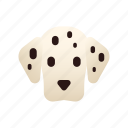 animal, breed, dalmatian, dog, pedigree, pet, purebred
