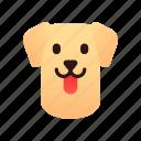 breed, canine, dog, labrador, pedigree, pet, retriever