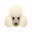 animal, breed, dog, pedigree, pet, poodle, purebred