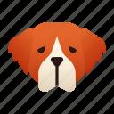 breed, dog, pedigree, pet, purebred, saint, st bernard icon