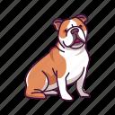 animal, bulldog, dogs, pet