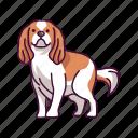 cavalier, charles, dogs, king, pet, spaniel