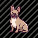 animal, bulldog, dogs, french, pet