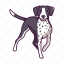shorthaired, pet, pointer, dogs, animal, german icon