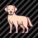 animals, dogs, labrador, pet, retriever