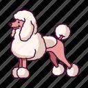 animals, dogs, pet, poodle