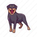 animal, dogs, pet, rottweiler