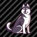 animal, dogs, husky, pet, siberian