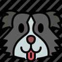 australian shepherd, dog, breed, pet, puppy, animal, cute