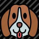 beagle, dog, breed, pet, puppy, animal, cute