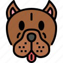 pit bull, dog, breed, pet, puppy, animal, cute