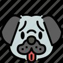 pug, dog, breed, pet, puppy, animal, cute