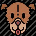 greyhound, dog, breed, pet, puppy, animal, cute