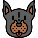 doberman, dog, breed, pet, puppy, animal, cute