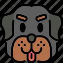 rottweiler, dog, breed, pet, puppy, animal, cute
