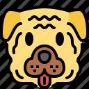 shar pei, dog, breed, pet, puppy, animal, cute