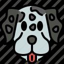 dalmatian, dog, breed, pet, puppy, animal, cute