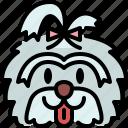 shih tzu, dog, breed, pet, puppy, animal, cute