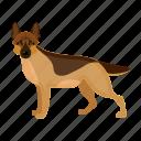 animal, breed, dog, mammal, pet, shepherd icon