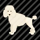 animal, breed, dog, mammal, pet, poodle icon