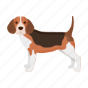 animal, beagle, breed, dog, mammal, pet icon