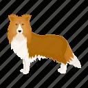 animal, breed, collie, dog, mammal, pet icon
