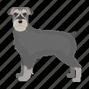 animal, breed, dog, giant schnauzer, mammal, pet icon