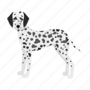 animal, breed, dalmatian, dog, mammal, pet icon