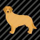 animal, breed, dog, labrador, mammal, pet icon
