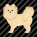 animal, breed, dog, mammal, pet, spitz icon