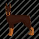 animal, breed, doberman pinscher, dobermann, dog, mammal, pet icon