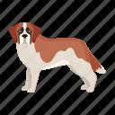 animal, breed, dog, mammal, pet, st. bernard icon