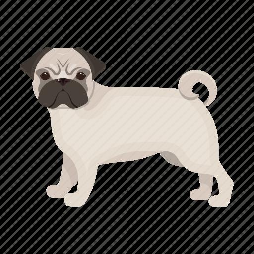 animal, breed, dog, mammal, pet, pug icon