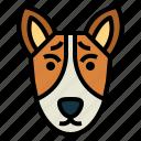 basenji, dog, pet, animals, breeds