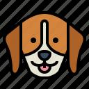 beagle, dog, pet, animals, breeds