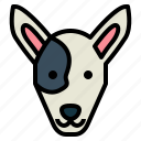 bull, terrier, dog, pet, animals, breeds