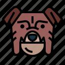bulldog, dog, pet, animals, breeds