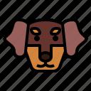 dachshund, dog, pet, animals, breeds