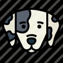 dalmatian, dog, pet, animals, breeds
