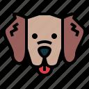 golden, retriever, dog, pet, animals, breeds
