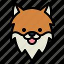 pomeranian, dog, pet, animals, breeds