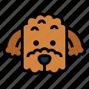 poodle, dog, pet, animals, breeds