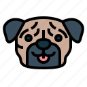 pug, dog, pet, animals, breeds