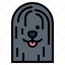 puli, dog, pet, animals, breeds