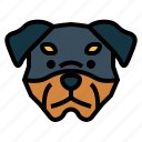 rottweiler, dog, pet, animals, breeds