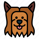 yorkshire, terrie, dog, pet, animals, breeds